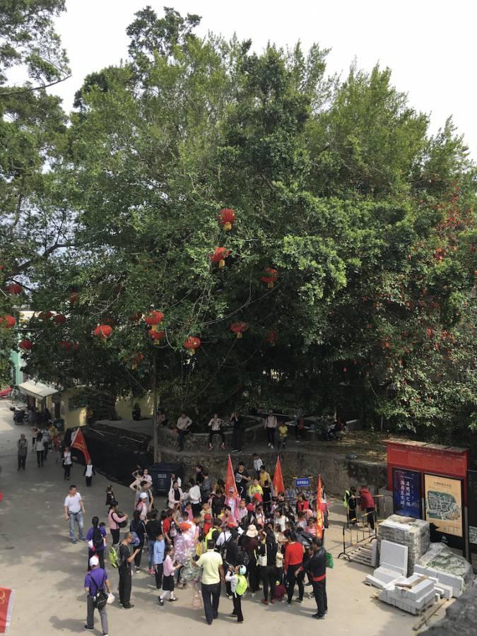 Те саме баньянове Дерево бажань