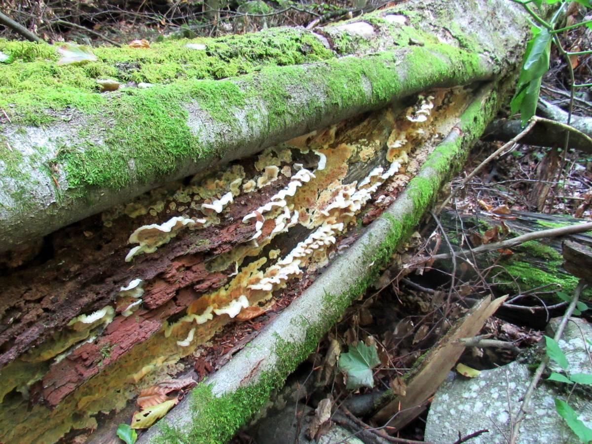 Студенти-біологи на практиці дізнавалися про роль мертвої деревини у лісі